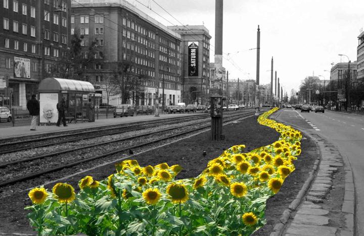 Słoneczniki dla Jana Pawła II